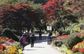 Trees and shrubs with colorful foliage along the wide walkway