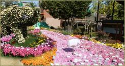 The Elephant made of flowering plants in a meadow with a pink flower ribbon on the background of the court